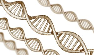 днк гены