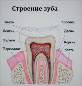 строение зуба онлайн диагноз зубная боль